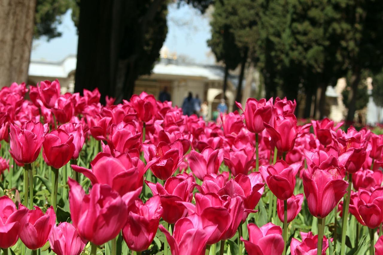tulipani istanbul palazzo topkapi